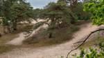 Verdener Dünen: Ein Biotop aus der Eiszeit