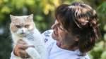 Schüsse auf Katze: Kater Georgy wird erneut zum Gerichtsfall