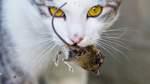 Katzen im Koma
