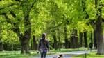 Bürgerparkdirektor zieht Bilanz: Besucherströme und Kastaniensterben