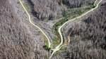 Staatliche Millionenhilfe soll Wald gegen Klimawandel wappnen