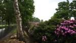 Weitere neun Bäume werden gefällt