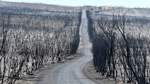 KANGAROO ISLAND BUSHFIRES, A general view of the damage done to the Flinders Chase National Park after bushfires swept t