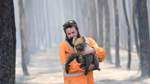 KANGAROO ISLAND BUSHFIRES, Adelaide wildlife rescuer Simon Adamczyk is seen with koala rescued at a burning forest near