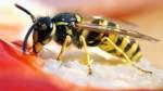 10 Tipps gegen Wespen am Esstisch - sinnvoll oder sinnlos?