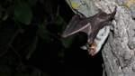 Neue Quartiere für Fledermäuse