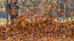 Laub am besten im Garten kompostieren