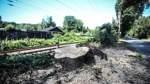 Bahn fällt erneut Bäume in Vegesack