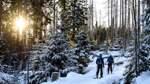 Während der Zeugnisferien: Freie Betten und beste Schneebedingungen im Harz
