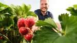 Früchte für Kuchen, Saft und Marmelade