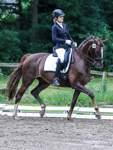 Pferdesport - Dressurreiten - Reportage vom ersten Turnier in Bremen seit Beginn der Corona-Krise