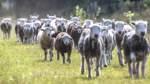 Volle Wolle am Erikaweg