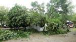 Umgestürzter Baum beschädigt Autos und Transformatorhäuschen in Huchting