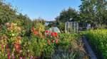 Nachfrage nach einem Kleingarten in der Großstadt steigt