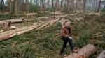 Streit um den Stuckenborsteler Wald