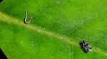 Schädlingsbekämpfung: Bremer Rhododendronpark setzt auf natürliche Mittel