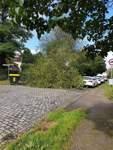 Auch in Arsten ist ein Baum auf die Straße gekippt.
