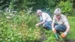 Handarbeit im Kräutergarten