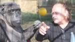 Viel Zirkus um einen Affen
