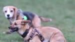 Bremen bekommt drei neue Hundewiesen