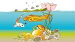 Hilfe, mein Goldfisch ist schwanger