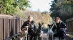 Ein Herz für Straßenhunde