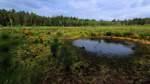 Das Engelsmeer soll wieder ein Moor werden