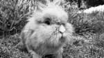 Die schönsten Kaninchen der Stadt