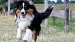 Bremer FDP für Abschaffung der Hundesteuer