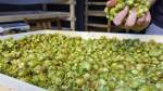 Bei der Gemüsewerft wird der Hopfen direkt vor Ort getrocknet.