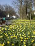 SUD Frühling im Süden Frühlingsseite Blumen Natur