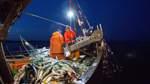 Fischbestände in großer Gefahr