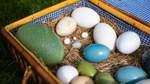 Was Menschen mit Eiern verbinden