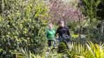 Gartenbesitzer Matthias Rieger führt seine neue Schirmherrin, die Landtagsabgeordnete Karin Logemann, durch die in vielen Farben leuchtende Gehölzsammlung an der Neuenkooper Straße.
