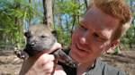 Pfleger ziehen Wolfbabys mit Flasche auf