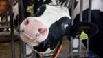 Milchbauern üben Kritik