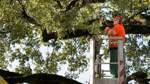 Baumpflege in Bremen am Limit