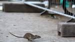 Anwohner beschweren sich über Ratten