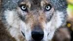 Jäger sprechen Zutrittsverbot für Wälder im Kreis Nienburg aus
