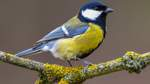 Nabu zählt Vögel in Deutschland