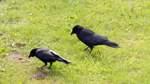 Vogelfalle auf Feld entdeckt