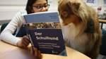 Seit einem Jahr hilft ein Schulhund Kindern beim Lesen