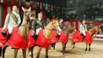 Große Bühne für Bremer Reiter