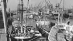 Der Europahafen in historischen Bildern