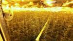 Bremer Polizei lässt riesige Marihuana-Plantage auffliegen