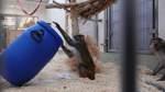 Auseinandersetzung über Tierversuche: Der Bremer Affenstreit