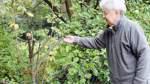 Bäume und Sträucher ohne Vorwarnung gekappt