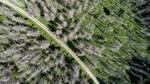 Niedersachsens CDU will Windräder im Wald