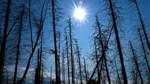 Klimawandel bringt häufiger Wetterextreme in Deutschland