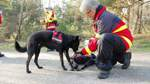 Rettungshunde legen Prüfung ab